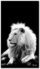 सफेद शेर