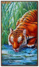 tigre 360