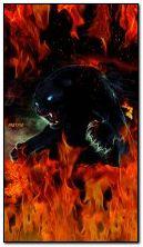 czarna pantera w upale