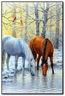 Su tarafından atlar