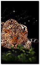 leopard 240x400