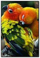 鹦鹉在爱中