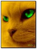 oeil de chat vert
