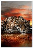 Jaguar near the sea