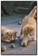 Cats Games