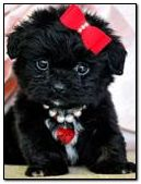 Cute puppy with red bow