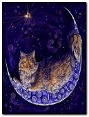 lua de gato