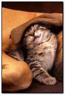 gatti carini