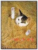 gato enterrado q bueno