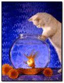 gato & pez