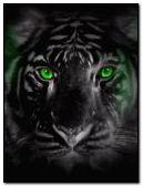 green tiger eyes