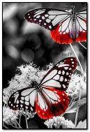 Papillons au néon
