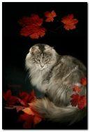 Herbstkatze