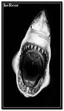 tiburon 360