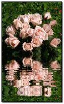 shimmerin pink