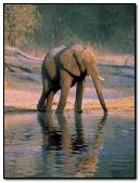 The Elephant:::