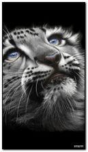 Sweet panther
