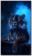 tiger an?mated