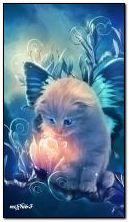 kitten và hoa huyền diệu