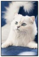 Biały kot 3