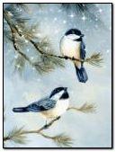Chim trong tình yêu