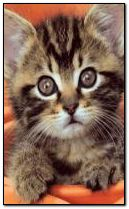 cat animated
