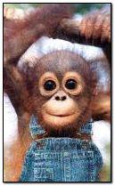 Macaco doce