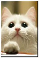 kucing 6