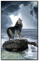 wolf in the rain