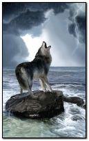 बारिश में भेड़िया