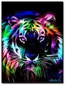 Kolorowy tygrys
