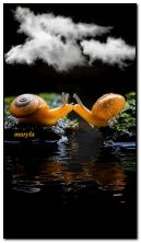 snails kiss