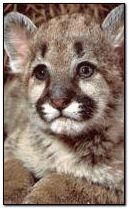 Little wild cat