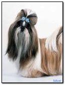 Glamorous dog
