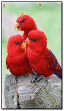 burung kecil kecil