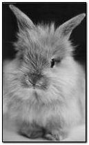 甜蜜的兔子