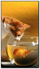 बिल्ली और मछली