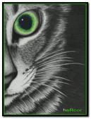 gato hc n95