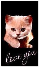 kitten for you