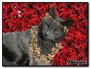 الأميرة كيتي في الورود