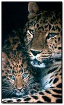 Leopard mum and baby