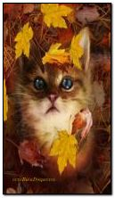 Cute Kitten-Autumn