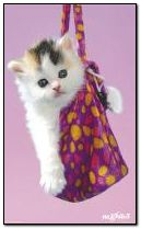 kitten in the handbag