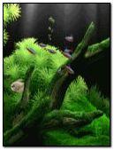 acuario verde