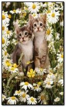 cute kitties with daisies.