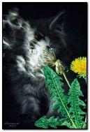 Kitten and dandelion