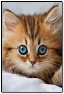 Mèo nhỏ 6