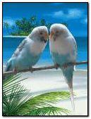 Chim tình yêu