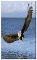 Морський орел