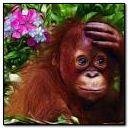 62 - Fractal Monkey